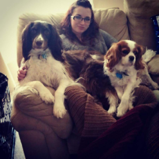 spaniels.png